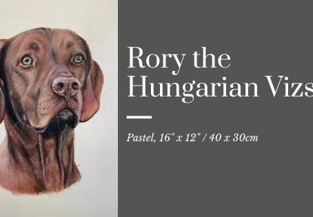 Rory the Hungarian Vizsla