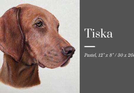Tiska the Hungarian Vizsla