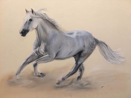Furioso-North Star Stallion