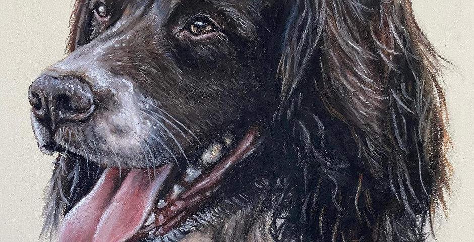 Place a 50% Deposit for a Pastel Pet Portrait