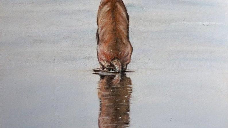 Reflection. Fine Art Print featuring a Hungarian Vizsla.