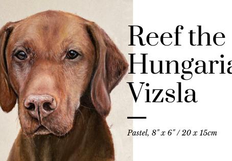 Reef the Hungarian Vizsla