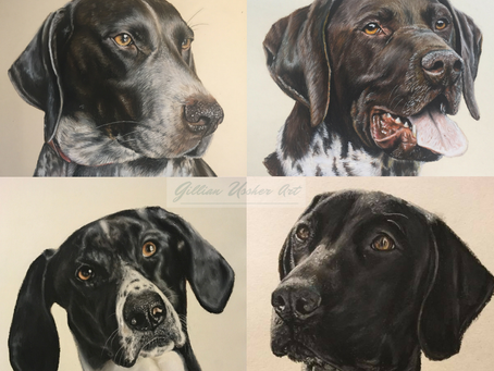 11 Portraits of German Shorthaired Pointers by Gillian Ussher Art