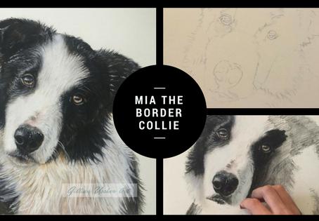 Mia the Border Collie