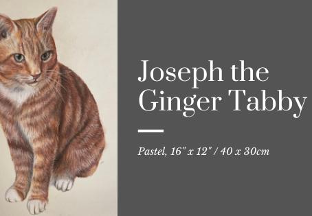 Jonathan the Ginger Tabby