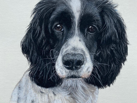 Pet Portrait Giveaways - February