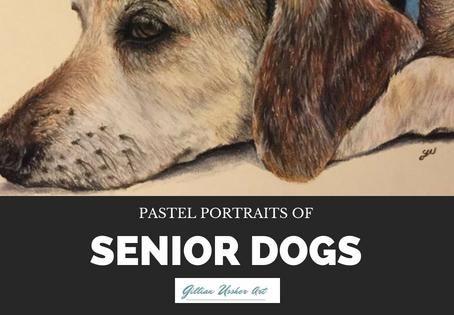 Pastel portraits of senior dogs