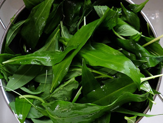 Wild garlic soup: hedgerow recipes #1