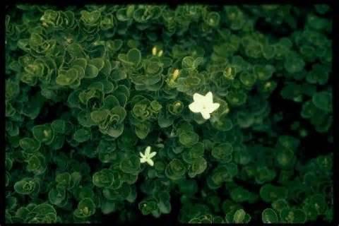 emerald blanket.jpg