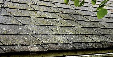 """img src=""""moldyroof.jpg"""" alt=""""algae on roof"""">"""