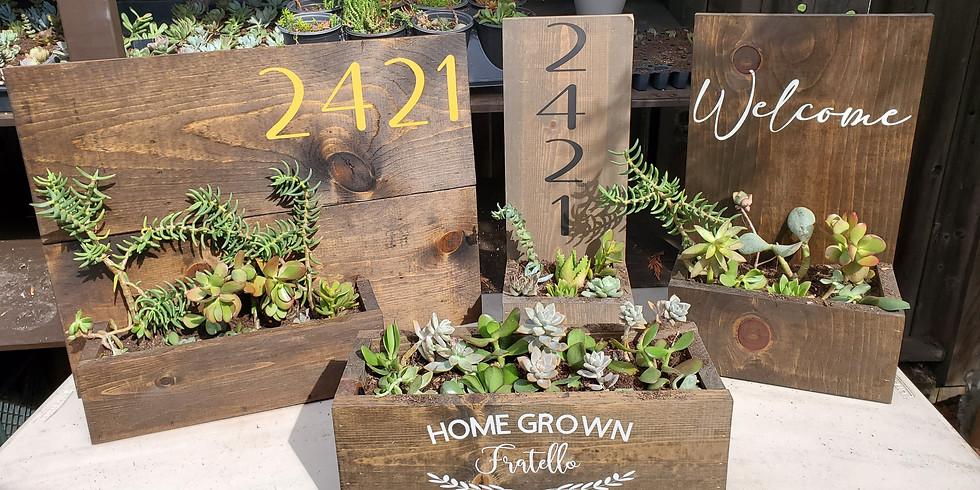 Virtual Sip+Craft: Succulent Planters