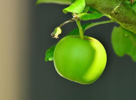 Ada Apa sih di Kebun Apel Malang?