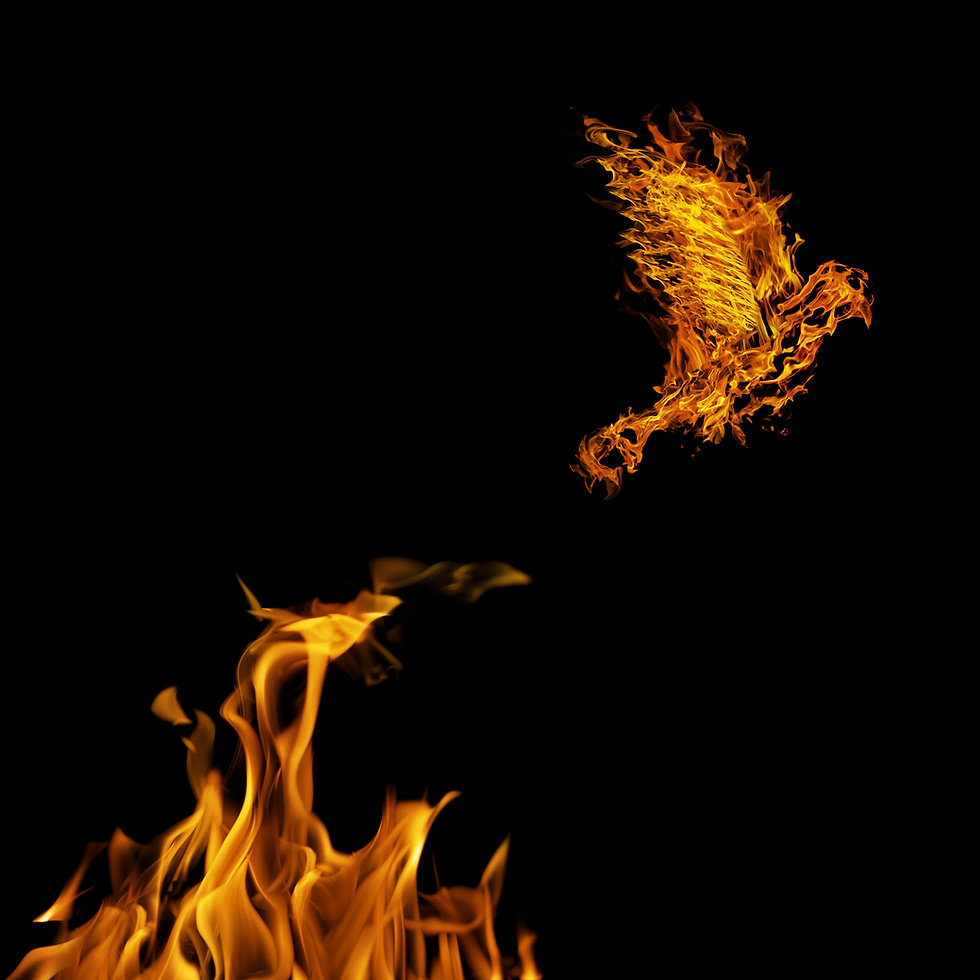 flame dove flying from yellow fire isolated on black background.jpg