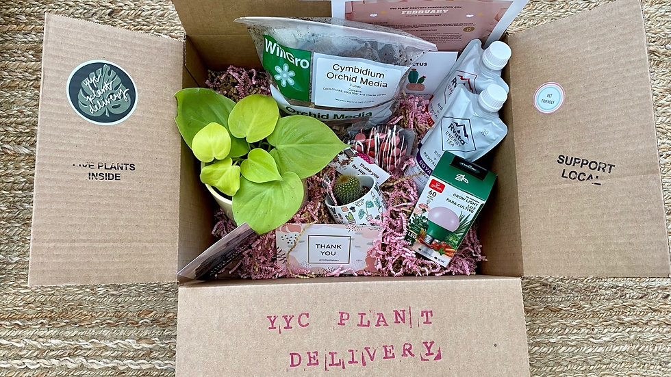 Plant Lovers Gift Box ( 1 time purchase )