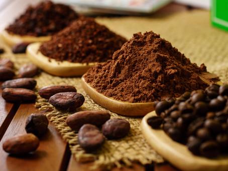 O que é chocolate tree to bar