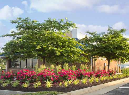 Commercial Shopping Center Landscaping