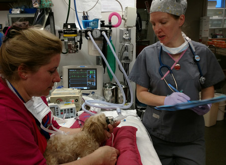 Checklists in Veterinary Anesthesia               Why, When, & How