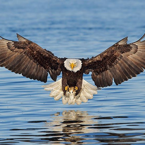 Fighting Off An Eagle Attack While Training In The River...