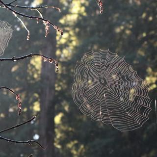 Spider Webs in Sunlight