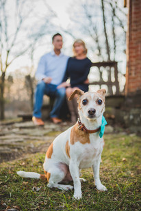 Dog portrait session. Taken at Leroy Oaks in St. Charles IL By: Composed and Exposed Photography