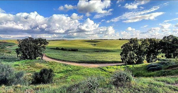 wheat on hills, 4 Mar 2021.jpg
