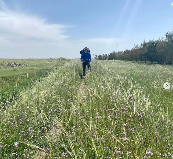 wild barley in north, 9 May 2021.png