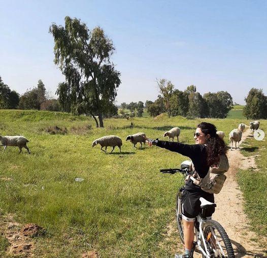 Sheep and biker, 28 Feb 2021.jpg