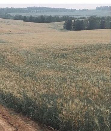 domestic grain 16 Mar 2021.jpg