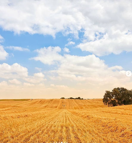 harvested wheat, 28 Mar 2021.jpg