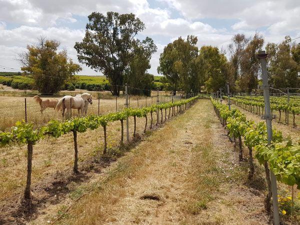 Galai Winery #2 13 Apr 2021.jpg