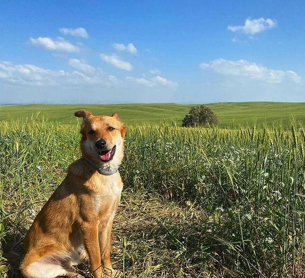 wheat, 4 Mar 2021.jpg