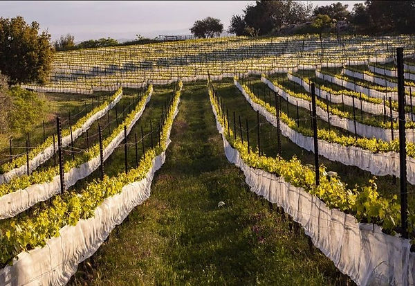 Tzora Vineyards 15 Apr 2021.jpg