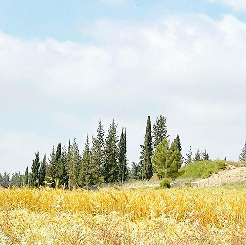 Jezreel Valley, 30 Apr 2021.jpg