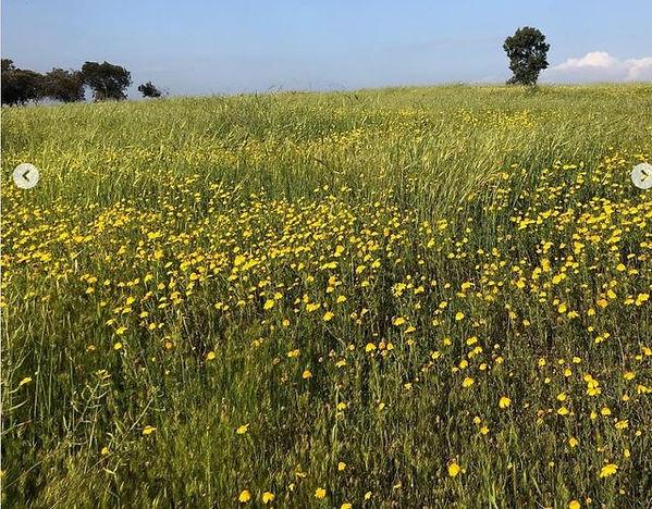 barley off Rt 232 4 Mar 2021.jpg