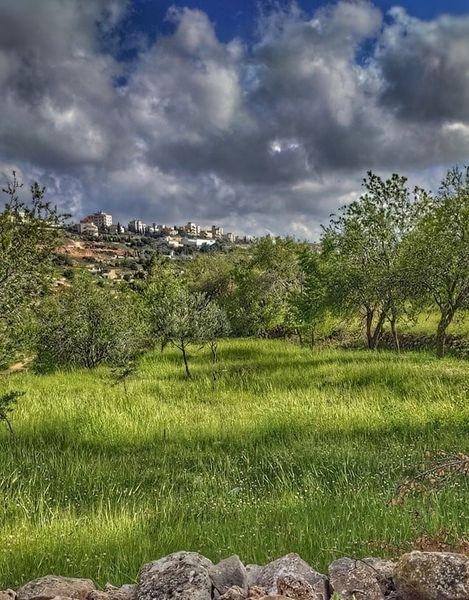goat grass judean hills, 18 Mar 2021.jpg