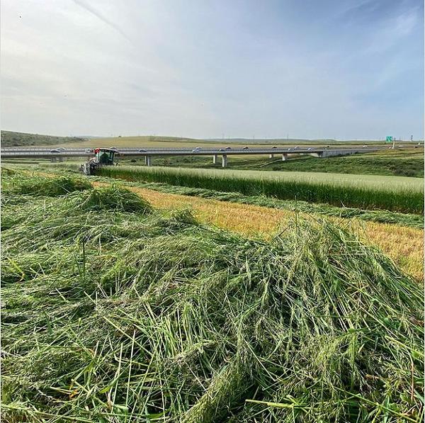 Ramot Menashe Silage Harvest (no barley)