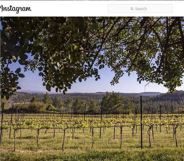 Tzora Vineyards #2 13 Apr 2021.jpg
