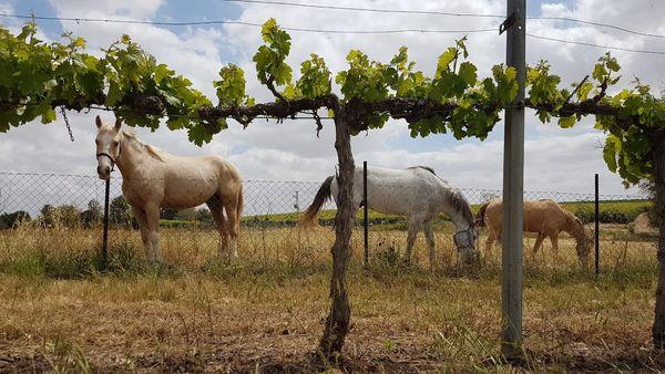 Galai Winery #1 13 Apr 2021.jpg