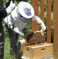 Kat Working Bees[4].JPG