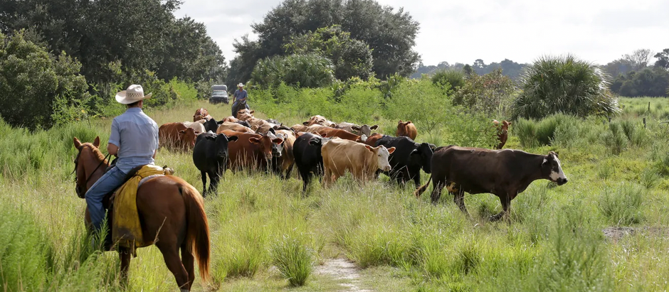 Florida's farms and environment go hand-in-hand