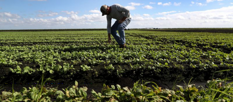 Sun Sentinel doesn't understand the challenges facing Florida's farmers
