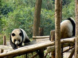 Chengdu pansa.jpg