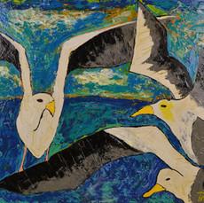 seagulls 15.jpg