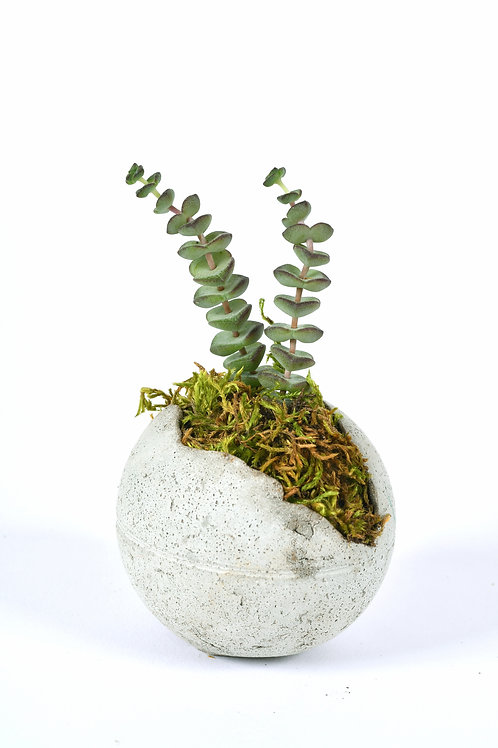 Grabuge Egg Crassula Perforata