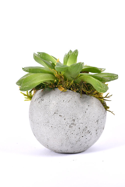 Grabuge Egg Haworthia