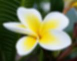 Frangipani, Music, Flowers, Weddings, Catering