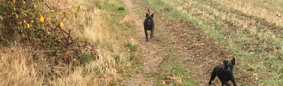 Dog Walk Brockshill Fields