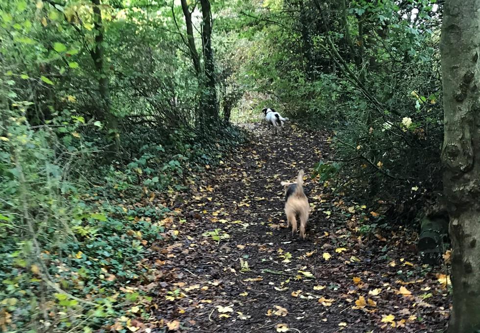 Blade & Willow.Oadby.Parklands. Dog Walker.JPG