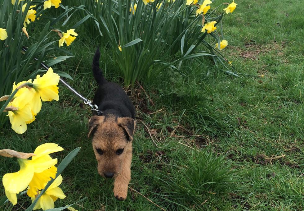 Knighton Park. Dog Walking
