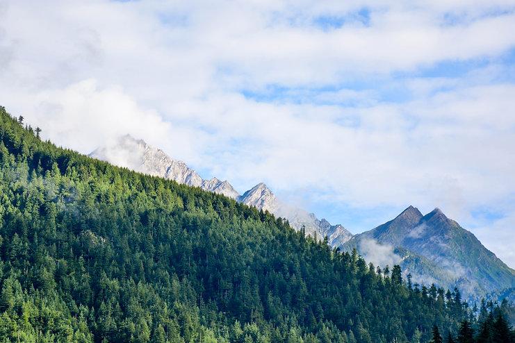 הרים ויער